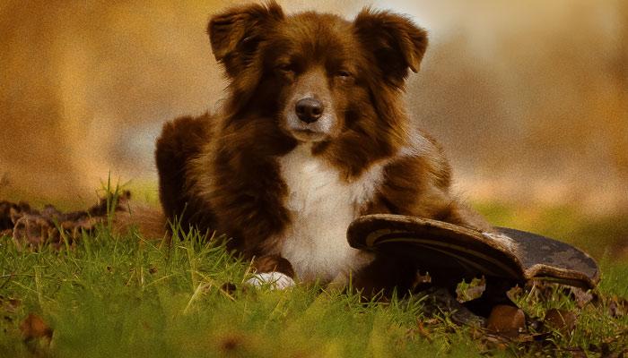 Hundefotografie Sven Dressler